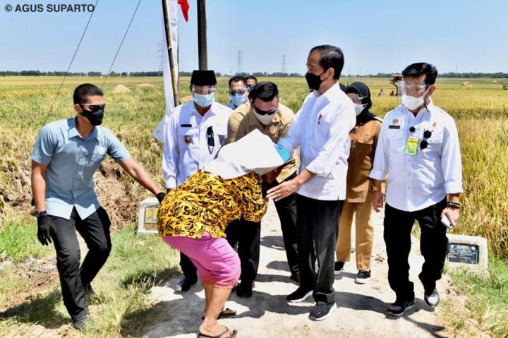 Foto: Jokowi Tinjau Panen Raya di Indramayu