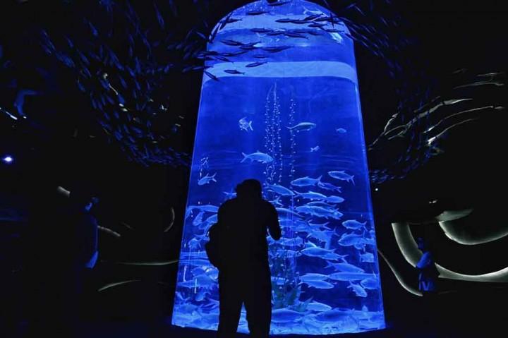 Peringatan Hari Kartini di Jakarta Aquarium dan Safari