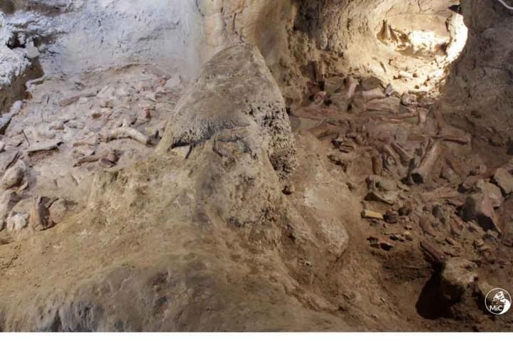 Potret Sisa-sisa Fosil Neanderthal yang Ditemukan di Gua Italia