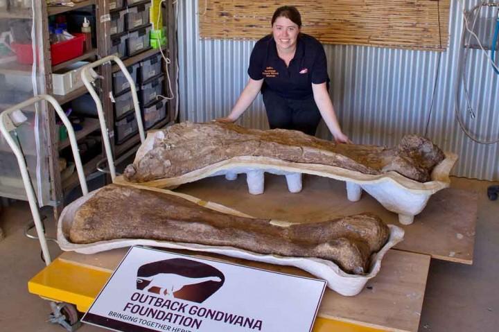Foto: Spesies Dinosaurus Baru Ditemukan di Australia