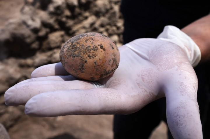 Penampakan Telur Ayam Berusia 1.000 Tahun yang Ditemukan di