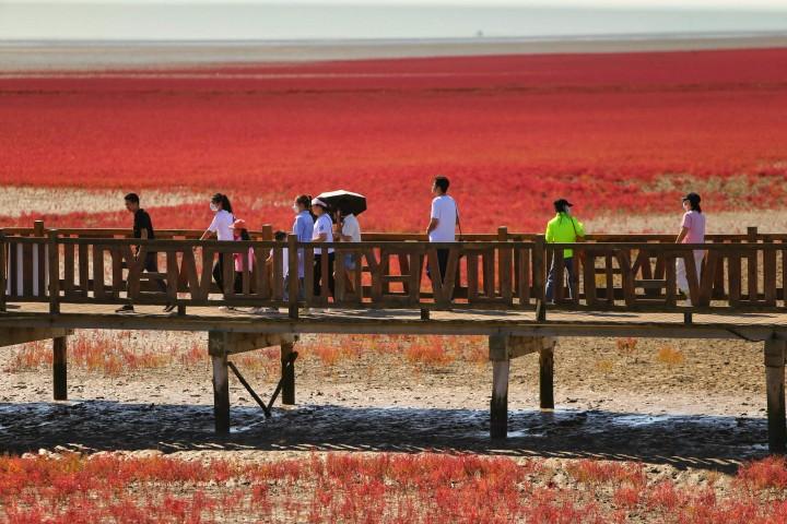 Melihat Keindahan Pantai Merah di Tiongkok