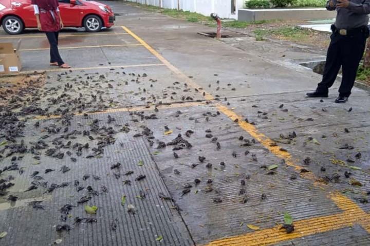 Viral! Ratusan Burung Pipit Berjatuhan dan Mati di Balai Kota
