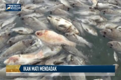 350 Ton Ikan di Danau Maninjau Mati Mendadak