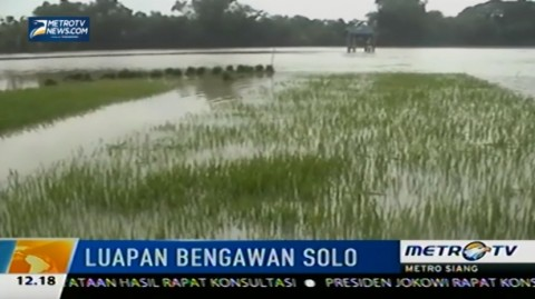 Bengawan Solo Meluap, 107 Hektar Sawah Terendam Banjir