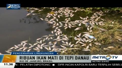 Tercemar Limbah, Ribuan Ikan di Rio De Janeiro Mati