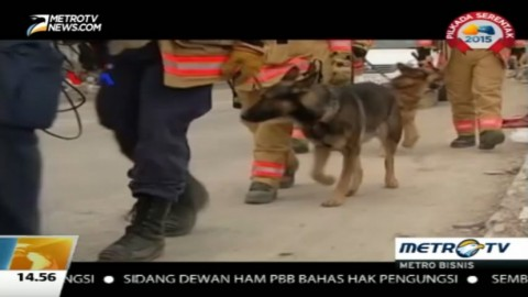 Melatih Anjing Pelacak Tim SAR AS