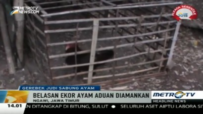 Polisi Gerebek Judi Sabung Ayam di Ngawi
