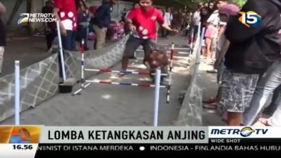 Puluhan Anjing Ikuti Lomba Ketangkasan di Semarang