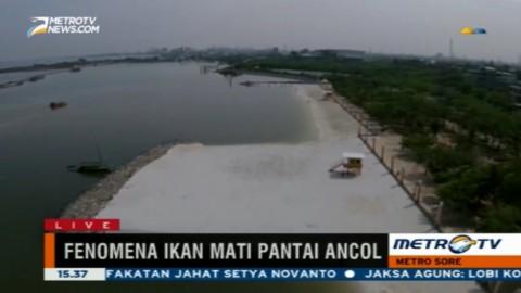 Pantai Ancol Masih Bau Amis Meski Telah Dibersihkan
