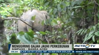 Tim Gabungan Giring Gajah Liar Jauhi Perkebunan Warga