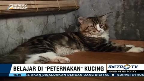 Belajar Merawat Kucing di Peternakan Kucing