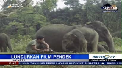Film Pendek Kampanye Selamatkan Gajah