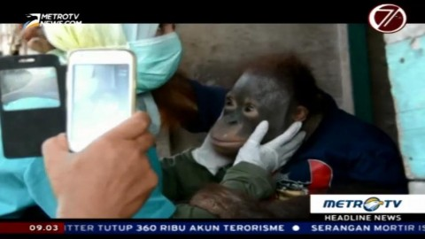 BKSDA Kalteng Sita Orangutan Milik Warga