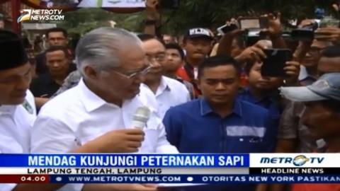 Mendag Kunjungi Peternakan Sapi di Lampung Tengah