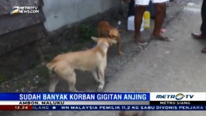 Petugas Beri Vaksin Antirabies untuk Anjing Warga