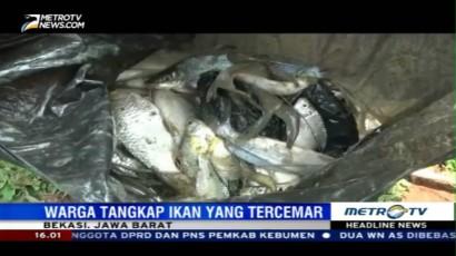 Warga Bekasi Berbondong Tangkap Ikan Tercemar Limbah