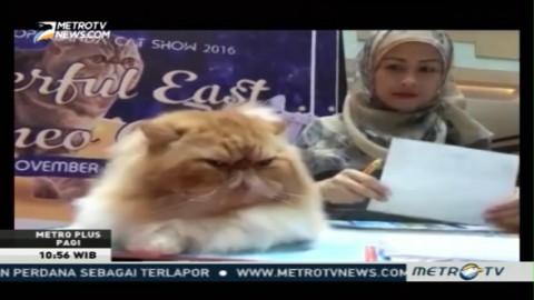 Puluhan Kucing Hias Ramaikan Lomba Pentas Kecantikan di Balikpapan