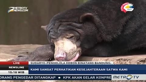 Penjelasan Pengelola Kebun Binatang Bandung Soal Beruang Madu