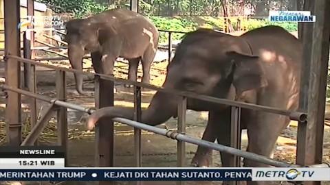 Catatan Masalah Pengelolaan Kebun Binatang di Indonesia