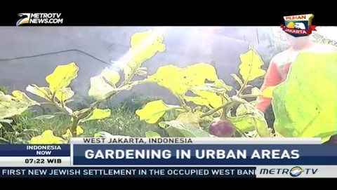 Gardening in Urban Areas with Jakarta Berkebun