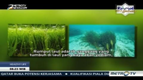 Nutrisi Rumput Laut