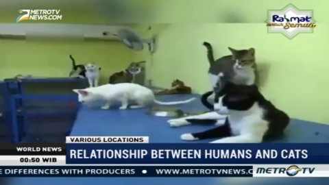Relationship Between Humans and Cats