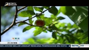Pohon Konservasi Restorasi Ekologi (2)