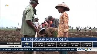 Pemerintah Libatkan Perbankan Soal Pengelolaan Hutan Sosial