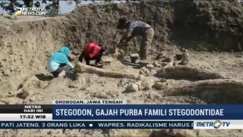 Warga Grobogan Temukan Fosil Gajah Purba Saat Menggali Sumur