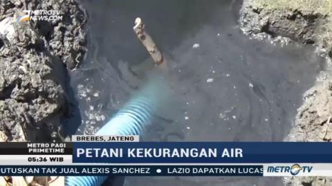 Petani Bawang Merah di Brebes Keluhkan Krisis Air