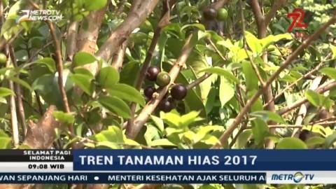 Tren Tanaman Hias 2017