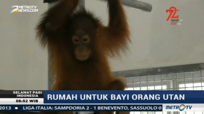 16 Bayi Orangutan Tempati <i>Baby House</i> Baru di Palangka Raya