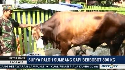 Surya Paloh Sumbang Sapi Berbobot 800 Kg ke Komunitas Aceh di Jakarta