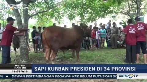 Jokowi Berkurban Sapi ke 34 Provinsi