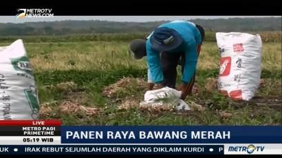 Areal Tanaman Bawang Merah di Kulon Progo Naik 13%
