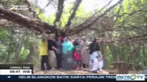 Wisata Pohon Trinil Raksasa di Lamongan