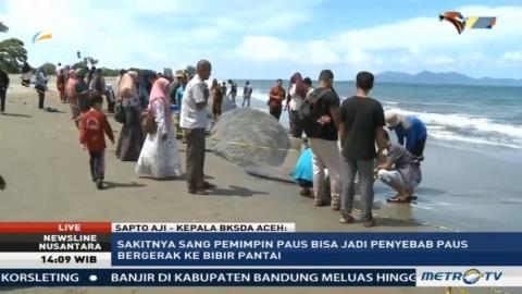Kenapa 10 Paus Terdampar di Pantai Aceh?