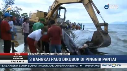 Aktivitas Pengeboran Diduga Jadi Penyebab Paus Terdampar di Aceh