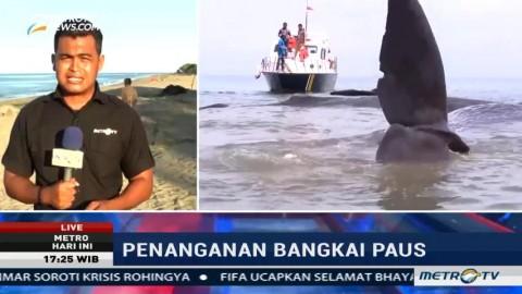 Pemda Aceh akan Bentuk Tim Evakuasi Satwa Laut