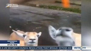 Viral Videos of Animal Abuse