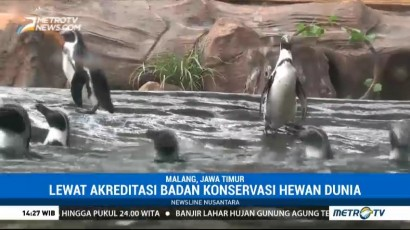 Melihat Tingkah Lucu Penguin di Eco Green Park