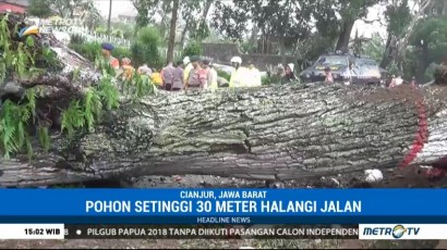 Pohon Tumbang Tutupi Jalur Bogor-Cianjur