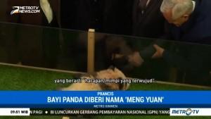 Bayi Panda Pertama yang Lahir di Prancis Diberi Nama Yuan Meng