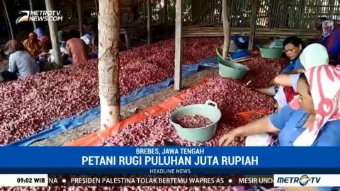 Harga Bawang Merah di Brebes Anjlok hingga Rp4.000/Kg
