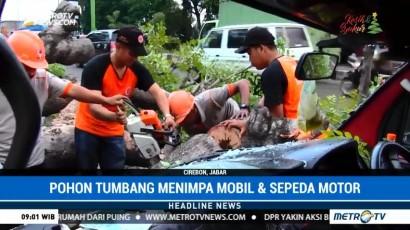 Pohon Tumbang Timpa Sejumlah Kendaraan di Cirebon