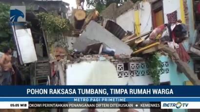 Pohon Raksasa Tumbang Timpa Rumah Warga di Makassar