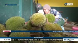 Dry Season Brings Blessings to Durian Farmers in Jepara