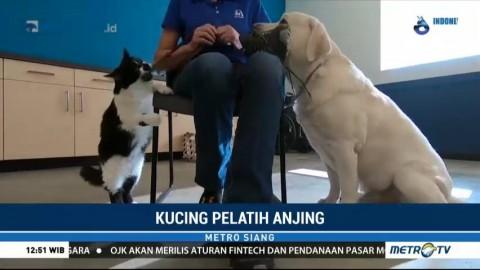 DeeOhGee, Kucing yang Jadi Pelatih Anjing