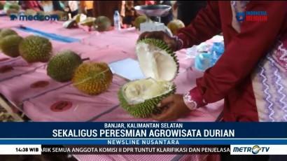 Mencicipi Durian Langsung di Kebun